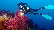 Korcula diving