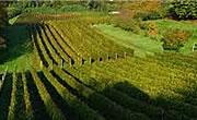 Podgoriile şi câmpurile de măslini